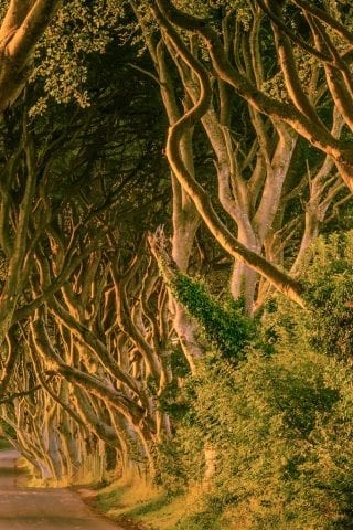 The Dark Hedges - Game of Thrones fan fix?